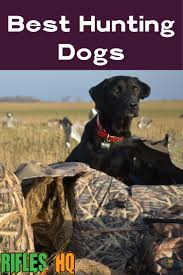 dog hunting truck the 25 best hunting dog names ideas on pinterest leopard dog