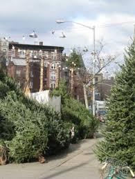 the delancey street christmas tree lot on pier 30 where i