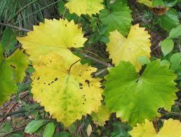 plants native to new mexico using georgia native plants native fall foliage yellow
