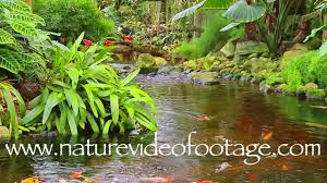 tropical indoor garden with koi fish nature video footage 0004
