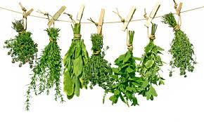 les herbes de cuisine comment faire pour raviver des herbes aromatiques un peu flétries