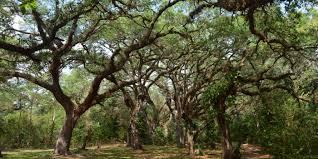 tree tops park weddings get prices for wedding venues in davie fl