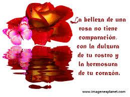 imagenes tiernas y romanticas imagenes tiernas de rosas con frases romanticas de amor find make