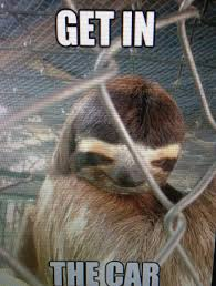 Sloth Asthma Meme - creepy sloth