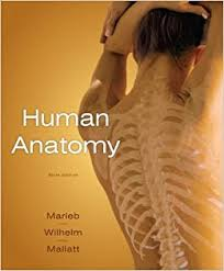 Anatomy Of Human Heart Pdf Anatomy Of The Heart Game At Best Way To Study Anatomy And Physiology