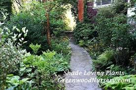 shade garden plants small plants for shady rock garden gardeners