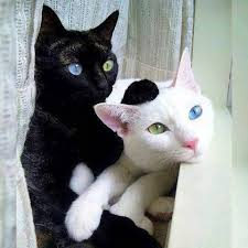 White Cat Meme - pin by marcia lynn west on cats pinterest cat animal and kitty