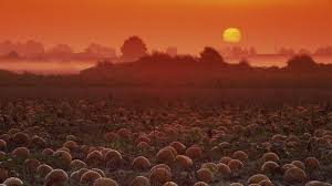 pumpkin desktops flower mound pumpkin patch wallpaper