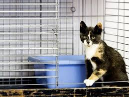 Best Volunteer Work For Resume by Best Volunteer Opportunities For Animal Lovers In Pittsburgh Cbs