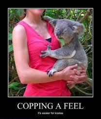 it s easier for koalas pics