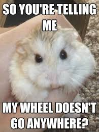 Rodent Meme - 15 funny hamster memes to get you through friday i can has