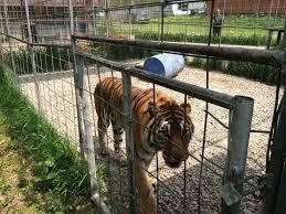 private tiger ownership in u s pulitzer center