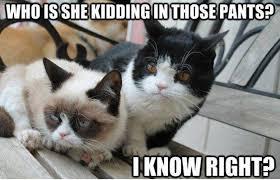 Grumpy Cat Friday Meme - grumpy cat friday jamallah bergman s stories of love and romance