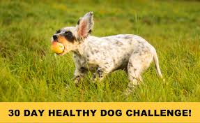 30 day dog challenge 2 png