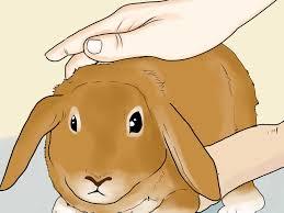 Come Costruire Una Casetta Per Conigli by Come Creare Un Ambiente Divertente Nella Gabbia Del Tuo Coniglio