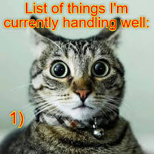 Lol Cat Meme - seriously lolcats lol cat memes funny cats funny cat