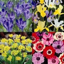 amazon com spring summer bulb garden 40 flower bulbs patio