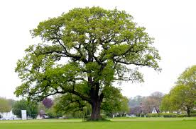 big happy tree earthling