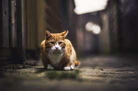 cat super hd animals hd 4k wallpapers