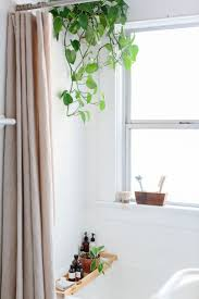 awesome plants for bathrooms 47 for your home interior decoration