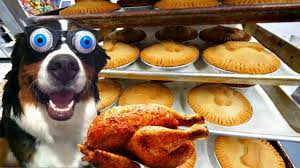 what 500 barksgiving dinners looks like thanksgiving for dogs