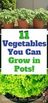 11 vegetables you can grow in pots have a vegetable garden