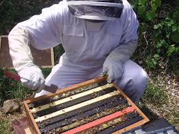 beekeeping the best beginners u0027 guide farming style