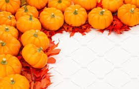 small pumpkins fall border of small pumpkins photos creative market