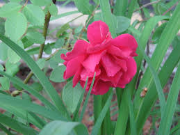 Plants That Dont Need Sunlight by Euphoria U2013 Lush Catsholiday Perfume Blog