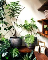 plants that grow in dark rooms winter care of houseplants indoor plant room images indoor plants