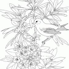 free download azalea coloring pages flowers coloring page