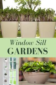 10 tiny gardens you can grow on your windowsill gardens an and