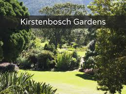 Kirstenbosch Botanical Gardens Kirstenbosch Botanical Gardens Culture Curious