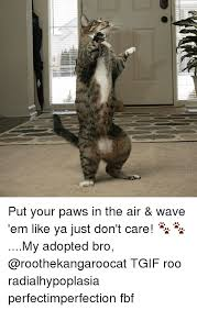 Fbf Meme - put your paws in the air wave em like ya just don t care my