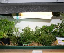 Indoor Spice Garden by Indoor Grow Space Automation Part 1 9 Steps With Pictures