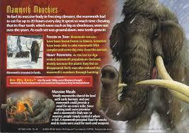 image wooly mammoth jpg wierd u0027wild creatures wiki