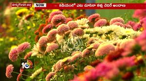 kadiyam nursery attracts visitors in rajahmundry 10tv youtube