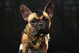 boxer puppy halloween costumes halloween dog parade in new york photo 1 pictures cbs news