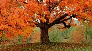 fall tree 29497 1920x1080 px hdwallsource