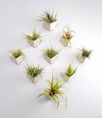 Wall Plant Holders 50 Unique Pots U0026 Planters You Can Buy Right Now