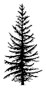 15 pine tree silhouette tattoo 1000 ideas about small tree