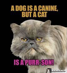 Dog Jokes Meme - funny felines tell cat vs dog jokes cats dissing dogs humor meow