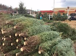 weekend spurs tree sales in western virginia
