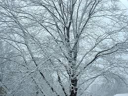 frosty tree frazier flickr