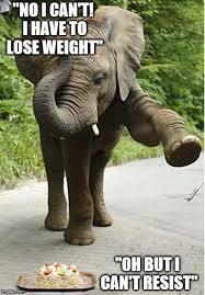 Elephant Meme - baby elephant birthday meme generator imgflip
