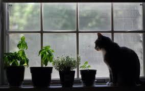 Indoor Herb Garden Light Fall Project Grow An Indoor Herb Garden U2013 A Healthier Michigan