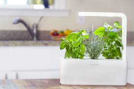 7 good herbs to grow indoor year round gardening easily