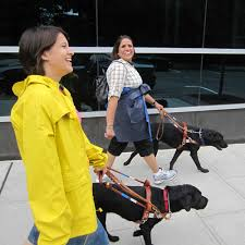 for a guiding for the blind guide dogs for with vision loss