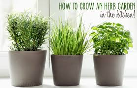 Herbs Indoors by 5 Ways To Grow An Herb Garden In The Kitchen