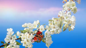 Cute Flower Wallpapers - flowers flowers spring pink green lovely beautiful cute nature